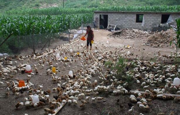 英山县|英山县对养鸡场产生环境