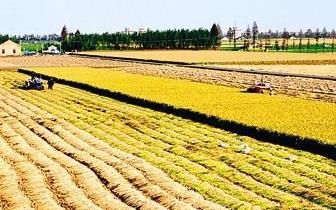 唐山推进农村土地经营权流转 流转率达到24.9%