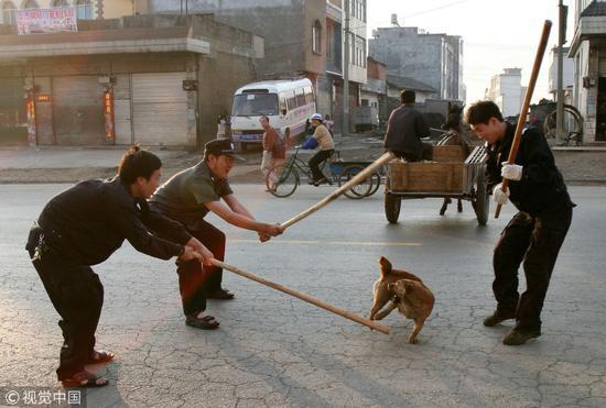 2006年4月25日,云南罗平县为建设成为国家级卫生县城,全城捕杀流浪狗 / 视觉中国
