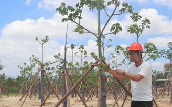 福州滨海新城森林城市景观带完成苗木种植