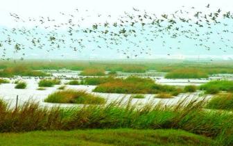 福建出台湿地占补平衡暂行管理办法:先补后占