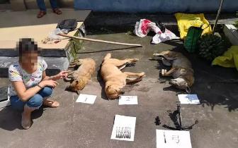防城港:光天化日带弓弩毒箭进村偷狗被村民愤怒拦截