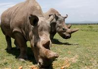 """大型动物快灭绝了,人类成为自然界""""超级捕食者"""""""