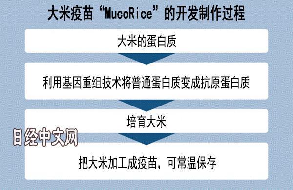 日本要用大米造口服防霍乱疫苗 可常温保存