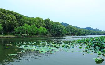 惠州西湖生态修复:水体透明度提升到水深1.5米以上