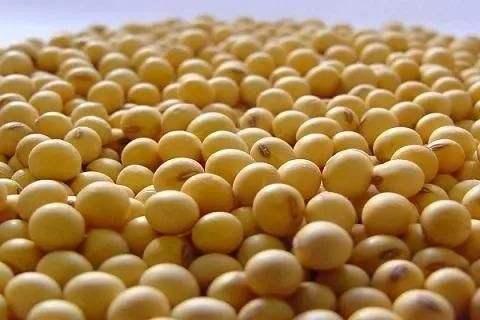 中国大豆缺口超9千万吨 将扩大南美采购大豆规模