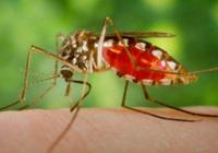 别纠结蚊子为啥只咬你了?人家就是渴了而已