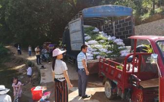 林业局开展送苗下乡 助力精准扶贫