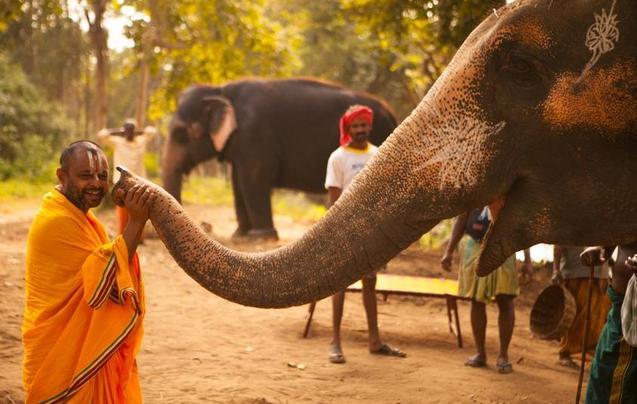 从疲劳和伤痛中恢复 探访印度大象疗养营