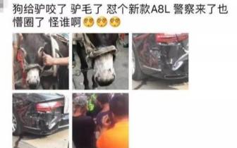 驴被狗吓后撞损汽车 警方:狗主车主达成赔偿协议