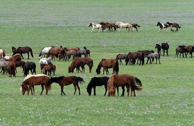 草原生态美