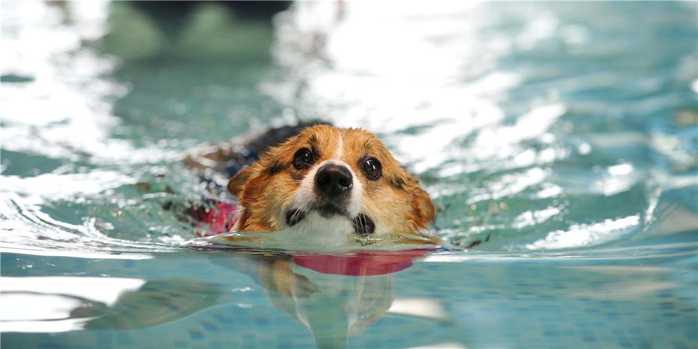 小伙为给爱犬治病 辞职开宠物游泳馆