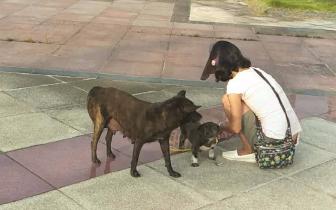 四川德阳咬伤多人流浪狗被动保组织救助 将为其绝育