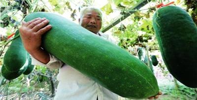 种菜40年 他靠种冬瓜盖起了新房