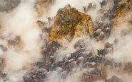 实拍非洲8万牛羚大军迁徙