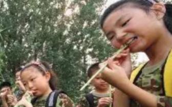 瞄准中国4800万中小学生:夏令营是教育还是生意?