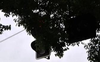 泰兴一路口红绿灯被遮挡 市民闯红灯可行政复议