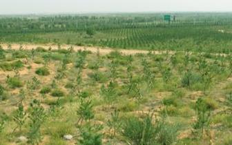 内蒙古气象干旱面积减少7.3万平方公里
