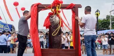 152斤罕见龙顶鱼王拍出27万高价