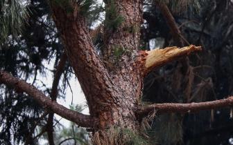 华人女子在美国被掉落树枝砸瘫痪 政府赔1450万美元