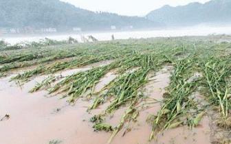 河南省492.1万人受灾 受灾群众正得到妥善安排