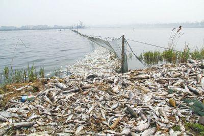右江江面漂浮大量死鱼原是有人乱倒废酸