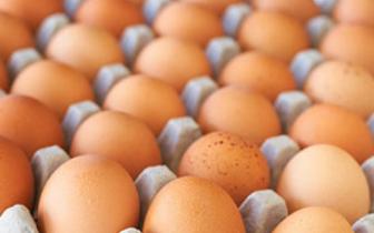 储存鸡蛋时一定要竖着放?不但防微生物还保证质量