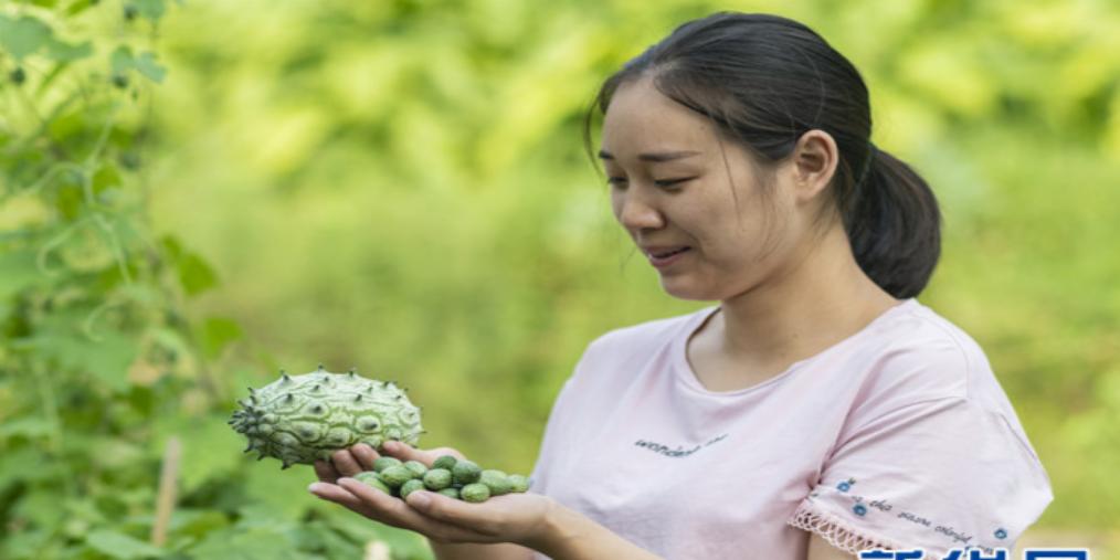特色果蔬种植助三峡库区秭归脱贫增收