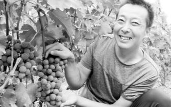 三门峡湖滨区高庙乡:高效农业助脱贫