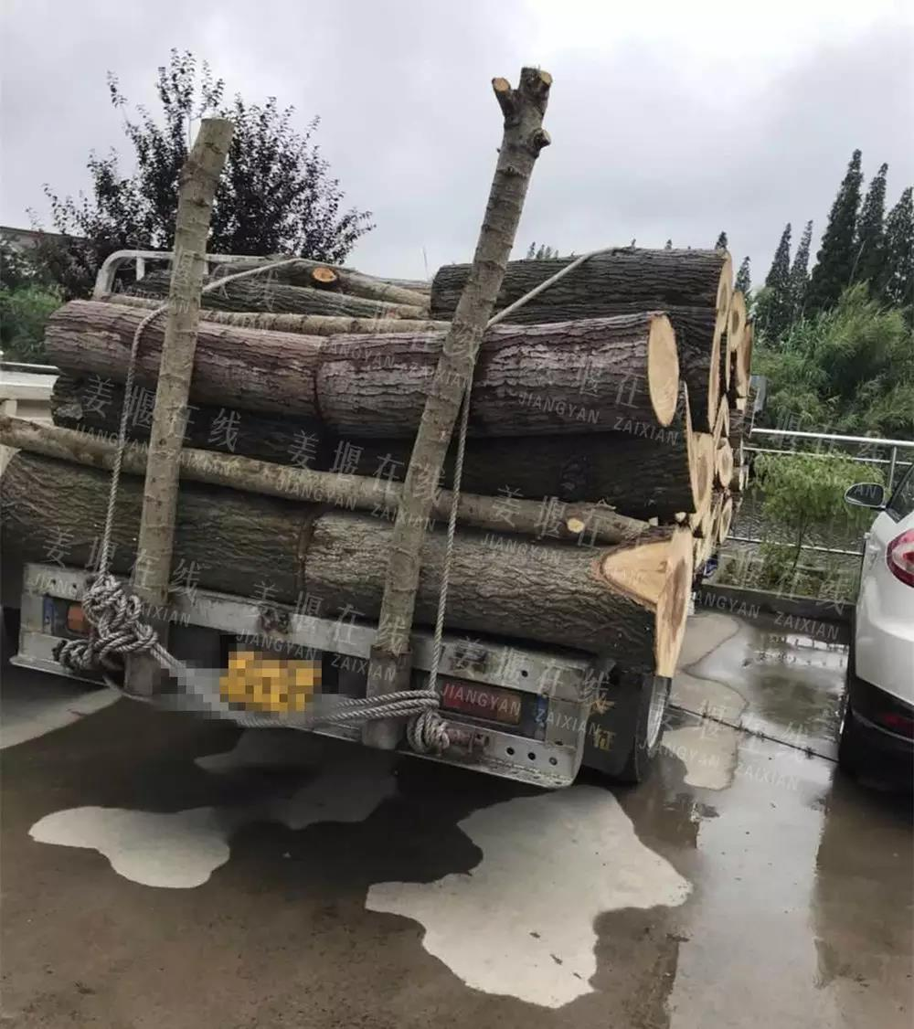 男子未办理林木采伐许可证 滥伐自家树被取保候审