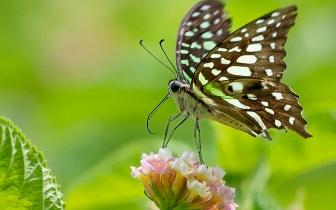 福州温泉公园昆虫戏花【组图】