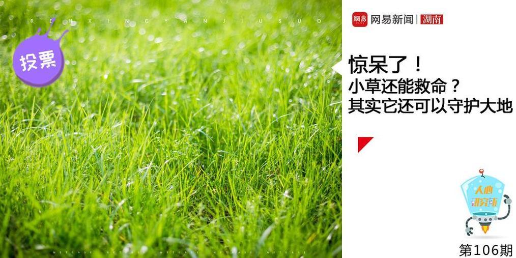惊呆!小草还能救命?其实它还可以守护大地