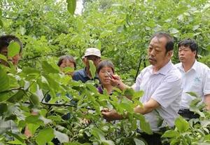 追记河北农业大学教授李保国