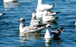 """青海湖""""鱼鸟天堂"""" 每年92种候鸟迁徙"""