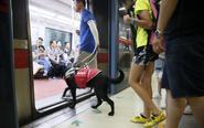 西安首只导盲犬将服役