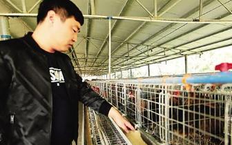 琼中137户贫困户抱团入股养殖山鸡 年产值达200余万元