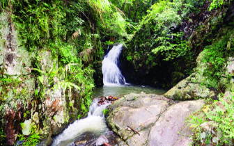 水东陂林场——飞泉瀑布山间挂 古树青松满眼春