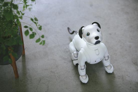 索尼的AI大业,从一只小狗开始