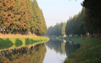 水杉与潜江——远古水杉新生代,平原林海是潜江