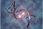 参与人细胞中基因调节的DNA新发现!