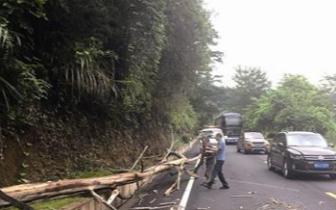 10米多长大树横倒在马路上 执法人员及时排除隐患