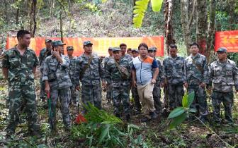 琼中开展清理违法占用天然林下套种专项行动