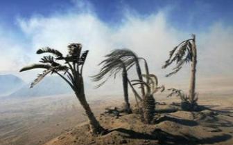 美国科学家:外来植物有可能加剧南加州野火风险