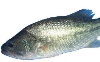福建人当心 这些鱼、虾、蟹被抽检出不合格