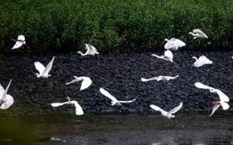 江西仙女湖与台湾日月潭签订协议 互免居民门票