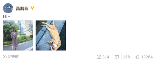 高圆圆拍照撸猫少女心爆棚 穿长裙气质温柔动人