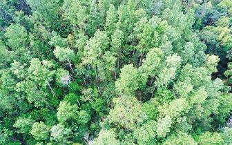 琼中黎母山天然林保护成效显著 生态状况明显转好