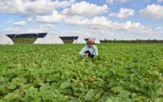 琼中县获中央财政农业资源及生态保护补助资金