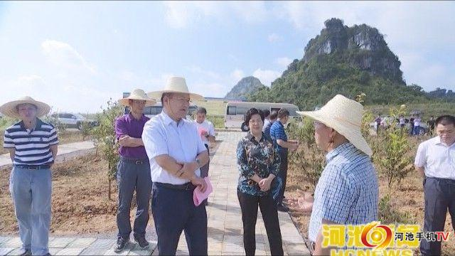 自治区政协副主席黄日波到罗城调研脱贫攻坚工作