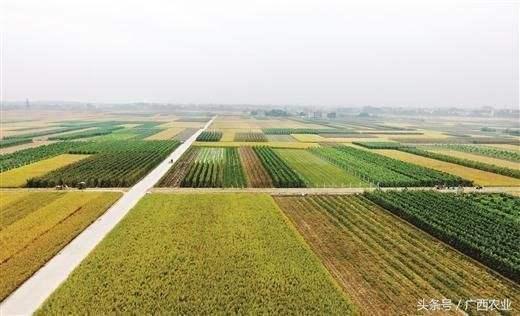 东兰投近六千万元实施农田土地整治重大工程项目